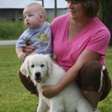 white golden retrievers mississippi