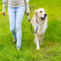 Tips for Choosing a Qualified Dog Sitter